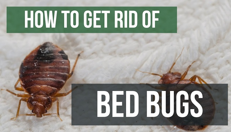 How To Get Rid of Bed Bugs Guaranteed