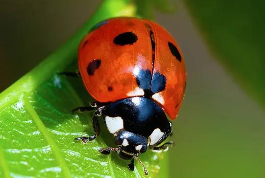 Low Impact Pest Control service