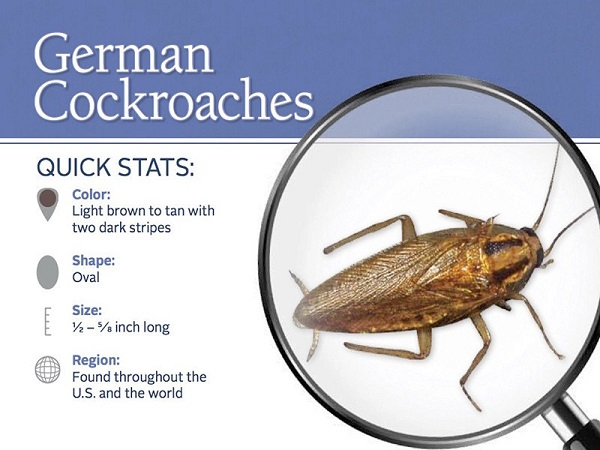 What Is The Best Way To Get Rid Of German Cockroaches
